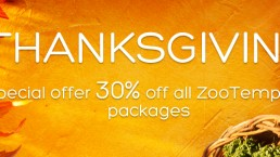 Thanksgiving special offer 30% off all ZooTemplate packages